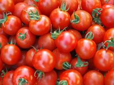 tomato processing project--to make tomato paste, tomato sauce and ketchup